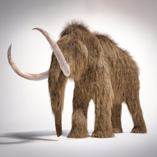 Artist's rendering of a woolly mammoth.