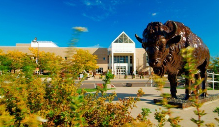 Statue of a Buffalo outside Center for the Arts.